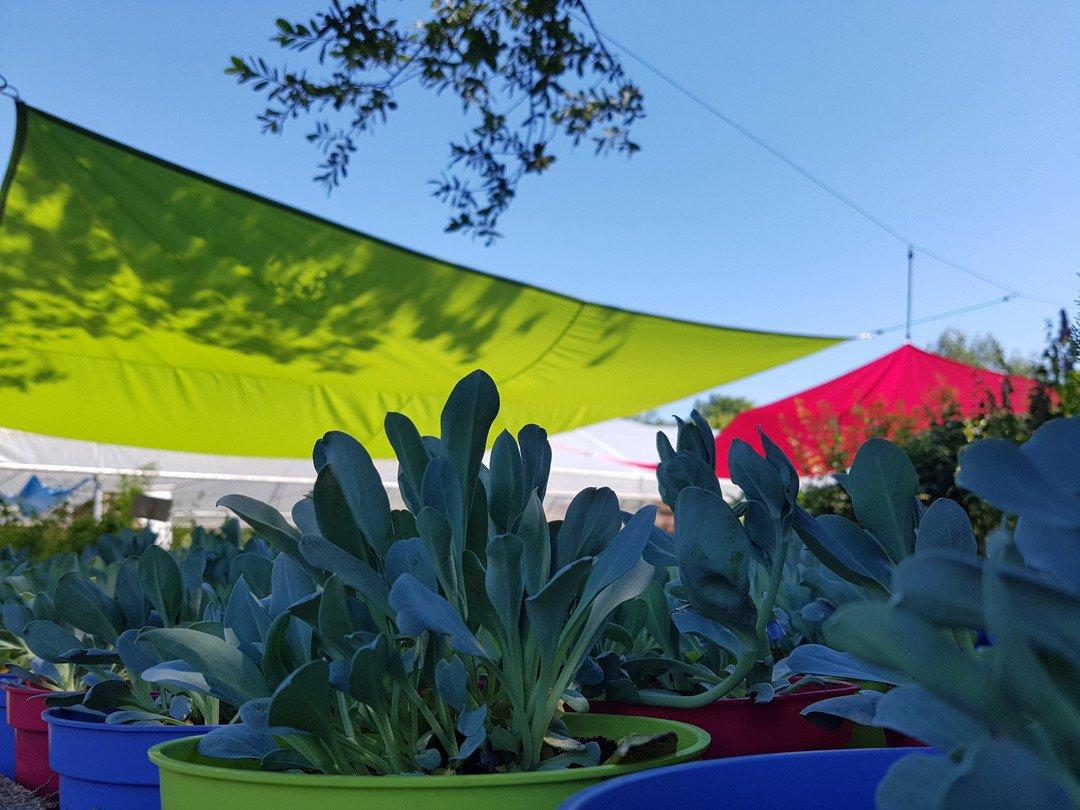 huitres-vegetales-mertensia-maritima-a-la-serre-o-delices-de-biganos sur le bassin darcachon